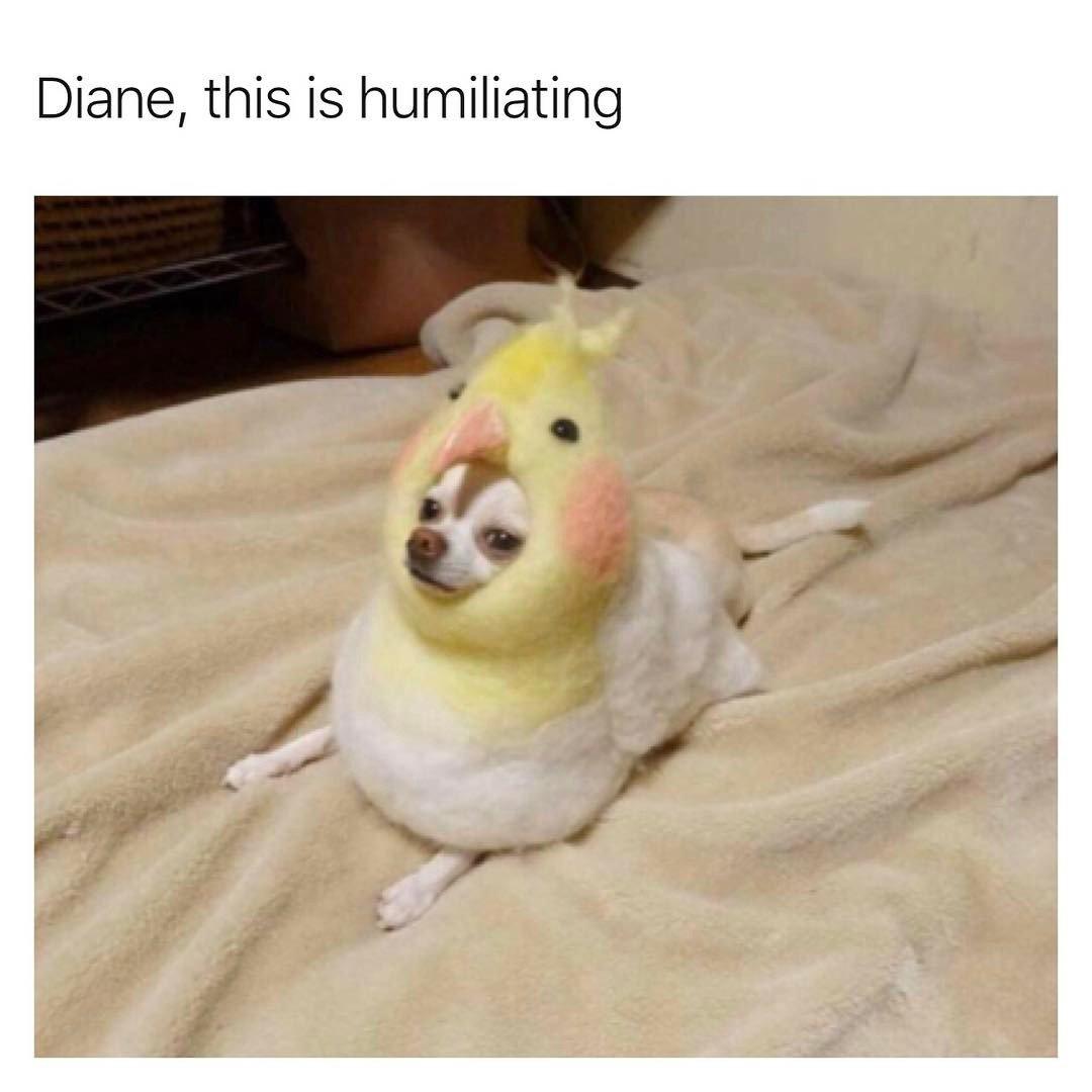 Dammit, Diane.