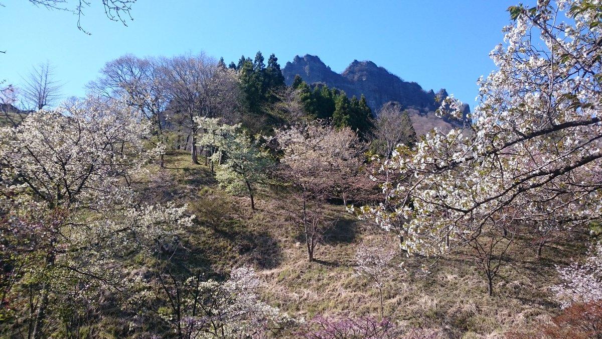 昨日の山行。一枚目の桜の中の妙義山が見て、写真に収めたくて行って来ました。ヤマノススメ本編では道の駅みょうぎからの中間道
