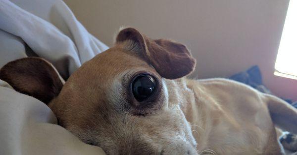 https://t.co/9oyH8sxBVJ freddy #dogpictures #dogs #aww #cuteanimals #dogsoftwitter #dog #cute https://t.co/bIlMAVshow