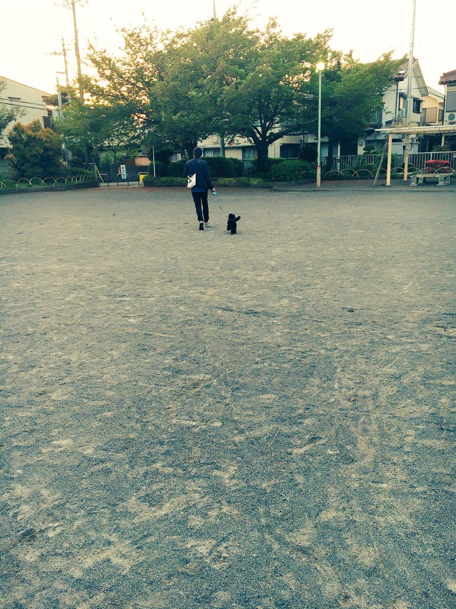 そういえば最近載せてなかったけどワンさんは元気ですお散歩はしないけど公園だと走り回るワガママなワンさん#王さん#リャンリ