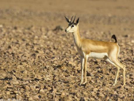 Hunters face trial over wildlife reserve shooting in Oman