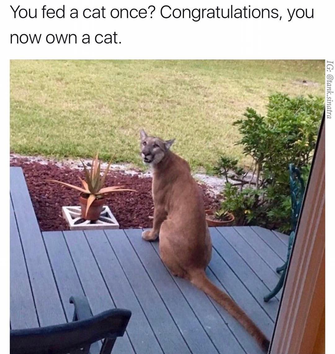 Never feed a stray cat...