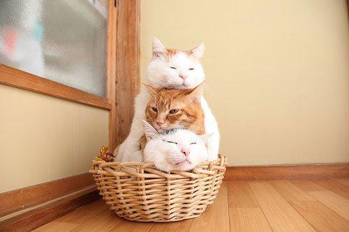 猫たちの写真展「かご猫展~かご猫シロと季節のなかで~」 千葉・柏にて開催 - https://t.co/gJn9YKebgF