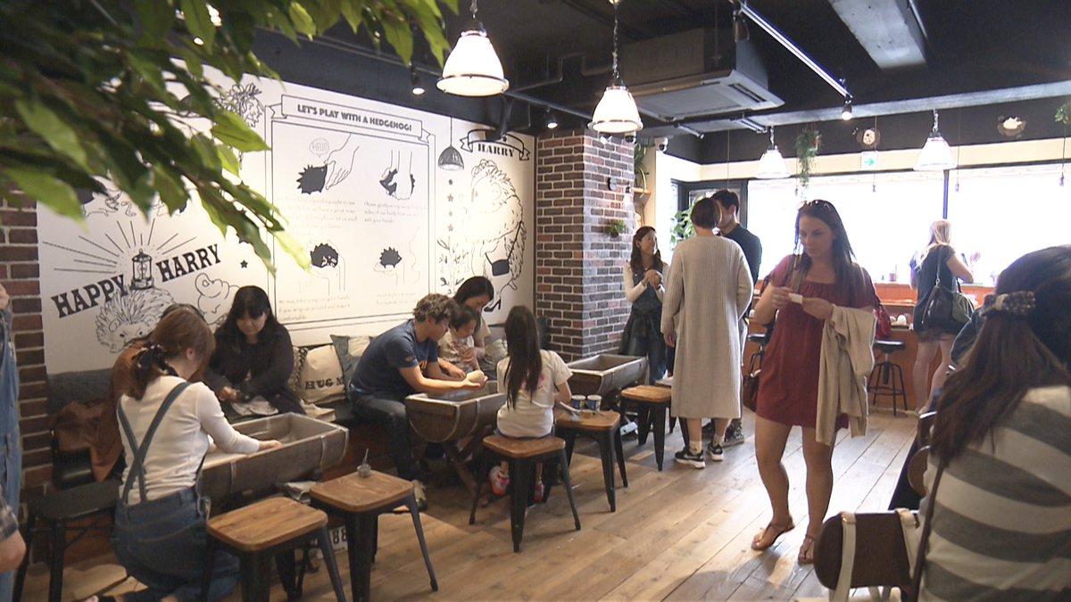 今夜のカルチャーは女性を中心に人気となっている ペットの話題です。専門のカフェも誕生するほど! そのペットとは…?