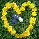平和で有りますように#ダンボー#ニャンボー#にゃんぼー#danbo#nyanbo