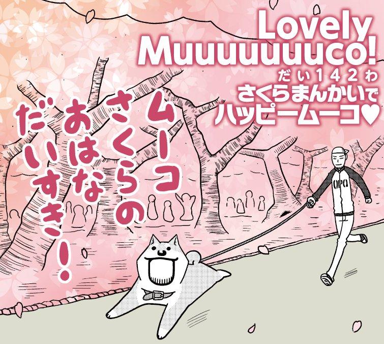 東京では散っちゃったけど秋田では今ちょうど桜が見頃!本日発売のイブニング10号『いとしのムーコ』は、さくらだいすきムーコ