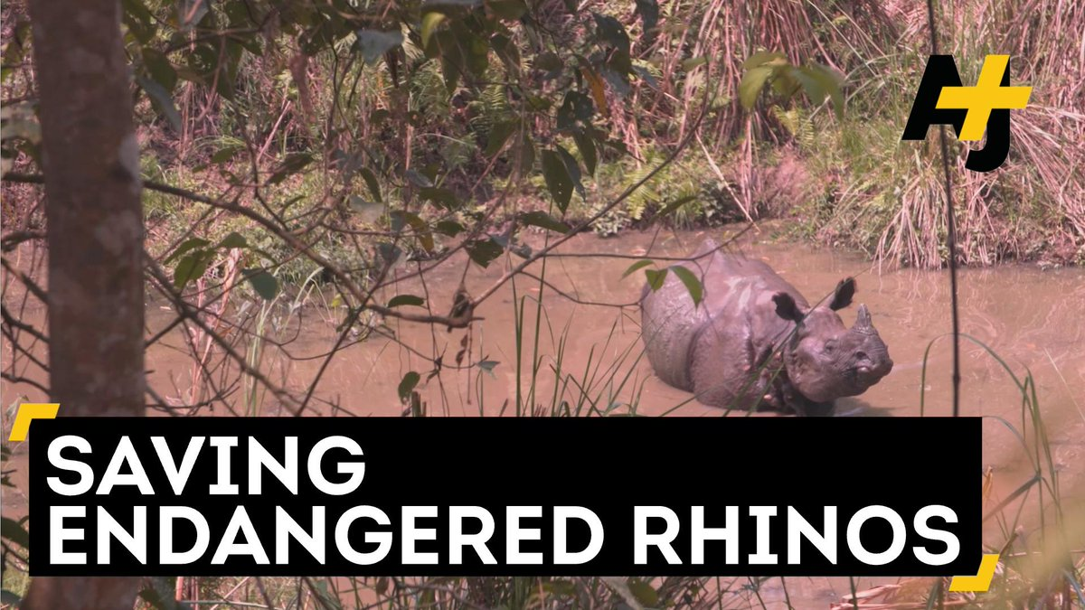 Today is #EndangeredSpeciesDay. See what it takes to help save endangered rhinos in Nepal.