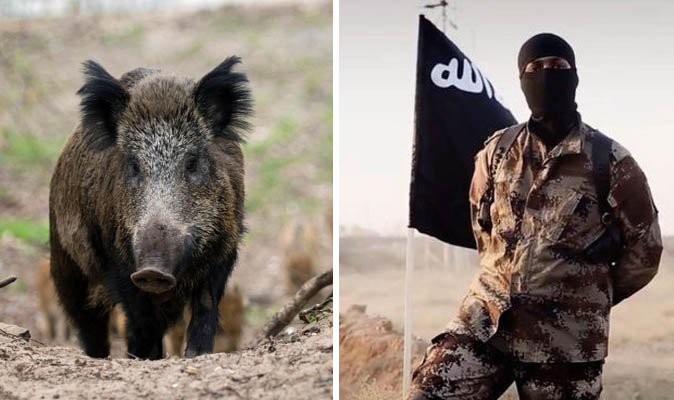 Three ISIS fighters killed by 'rampaging WILD BOARS' in Iraq's Kirkuk https://t.co/ifBdQG8wPe