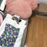 可愛いすぎて無理ww専用の布団で寝ている猫が可愛すぎるwww
