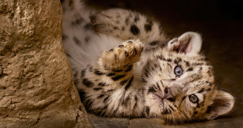 Quiz Which Cute @Disneynature Baby Animal Do You Need To See Right Now