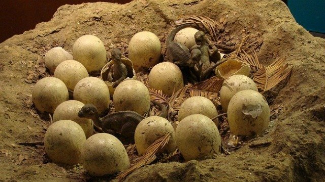 70 million-year-old dinosaur egg fossils discovered in China