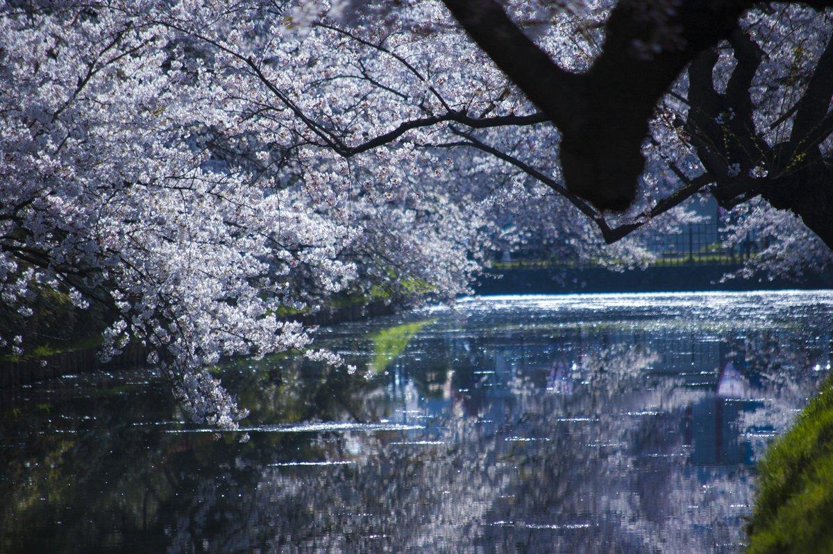 #弘前公園 #ふらいんぐうぃっち4月25日 弘前公園 出店団子屋さん アイス屋さん