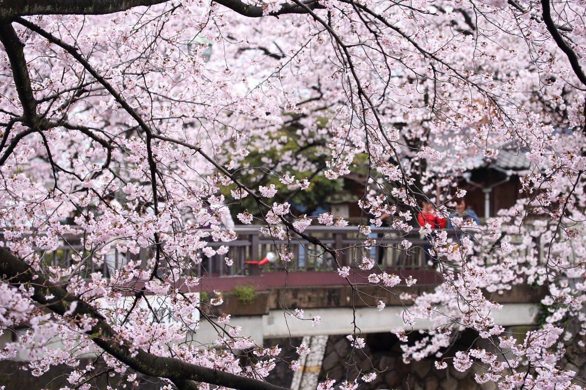 聲の形の桜#聲の形
