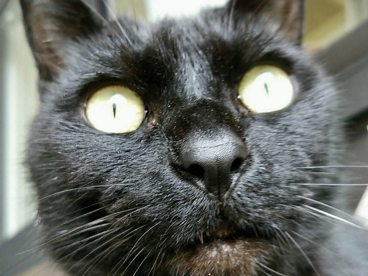 『ガラスの仮面』(H290426)※特別展「招き猫亭コレクション―猫まみれ」開催を記念して、これまでスタッフが撮りためて