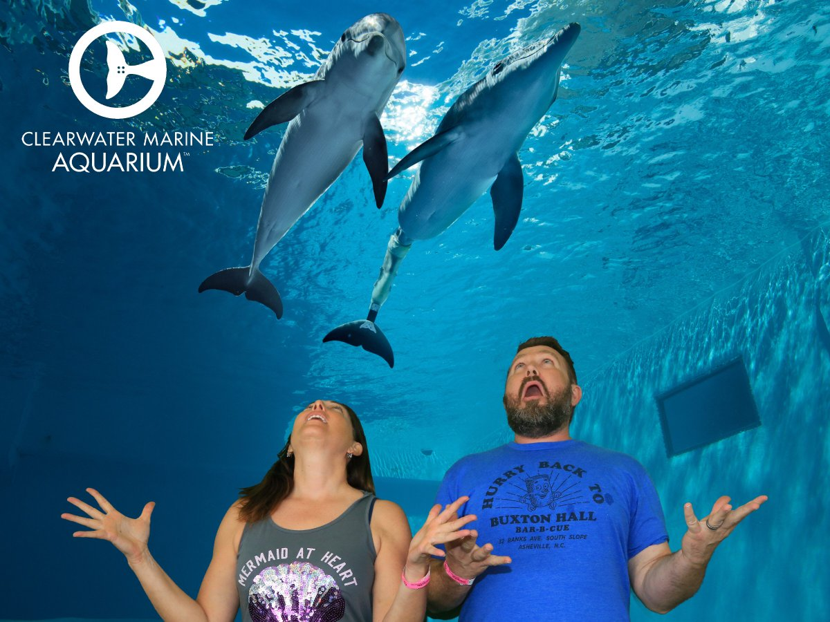 "test Twitter Media - The @CMAquarium = rescue, rehab & release. Visit Hope & Winter, stars: ""Dolphin Tale!"" Thx @BeardedWriter for sharing green screen with me. https://t.co/LDAoFKUonD"
