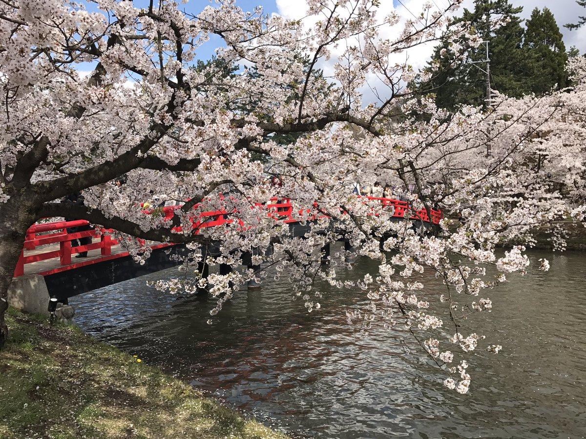 #弘前さくらまつり #ふらいんぐういっち 晴れた日&桜時期に春陽橋のfw原作本2巻表紙撮影出来た♪あと今日も(仮