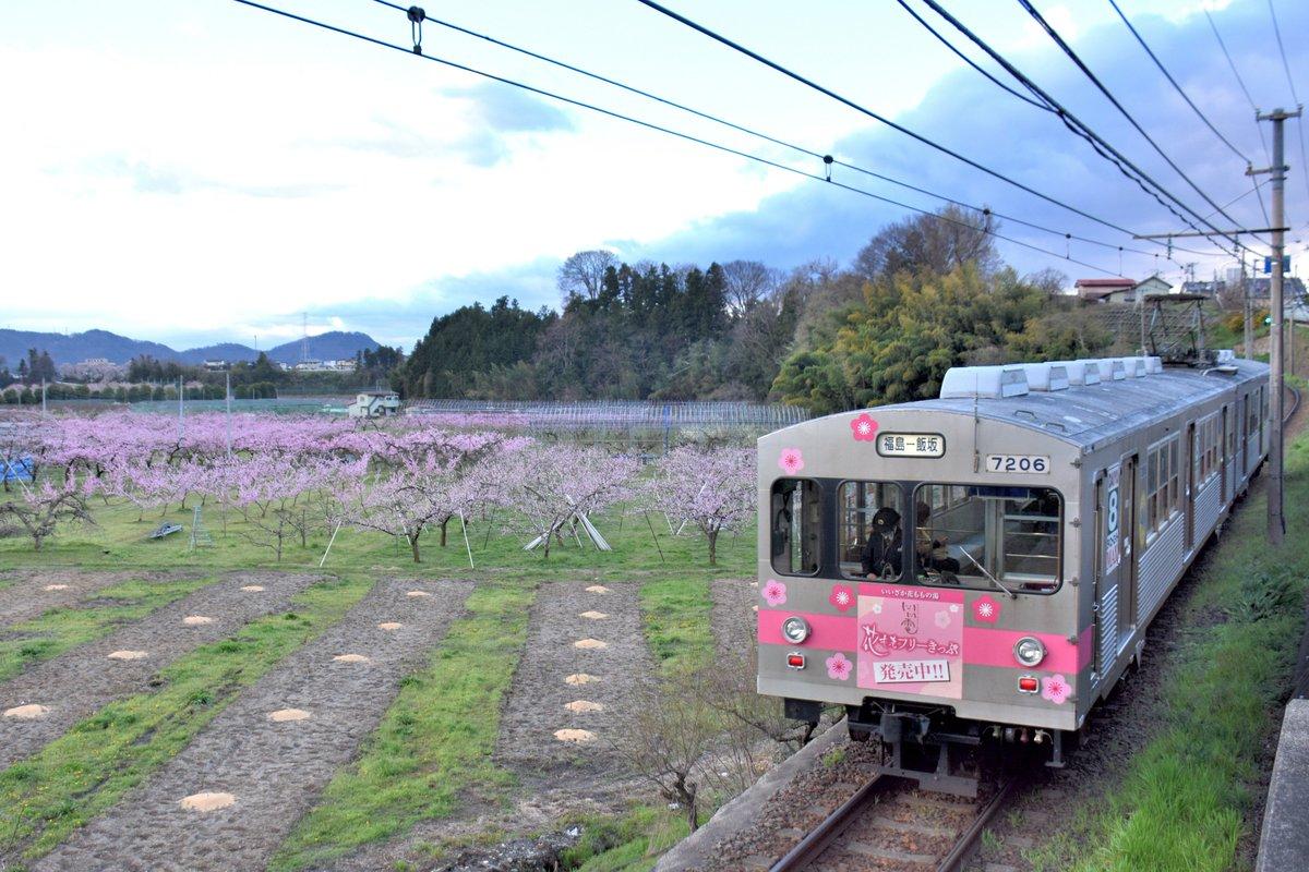 先日の飯坂線。花ももと撮りたくて会津若松から回しました。湯ったりきっぷのポスターにもなっているここ、手前の木が伐採されて