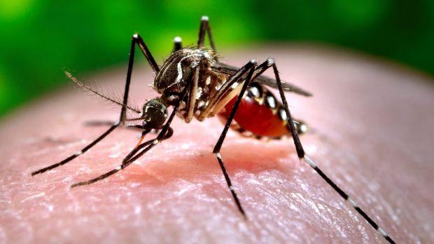 Dengue fever outbreak in Nauru hits 10 per cent of asylum seekers