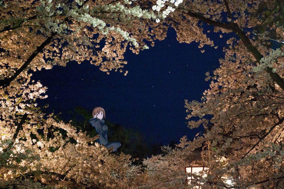 #弘前公園 #ふらいんぐうぃっち弘前公園 夜桜ハ-ト桜とふらいんぐうぃっち犬養さん