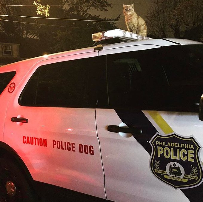 That is one brave @PhillyPolice cat reporting for the night shift. https://t.co/PzaSFX9SFd