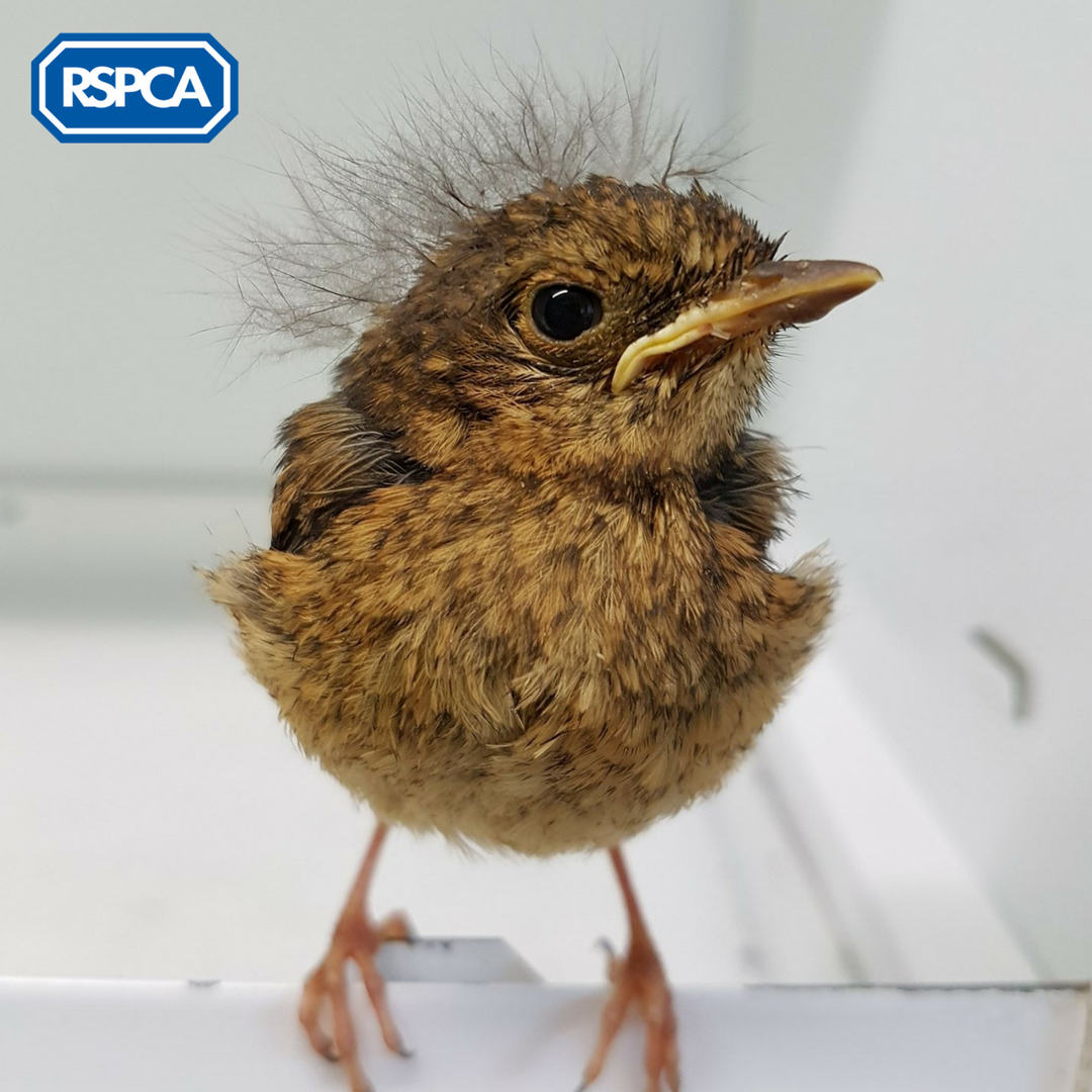 test Twitter Media - #Gardening this #bankholidayweekend? Make sure you look before you lop! We see far too many injuries to #wildlife: https://t.co/Et6XepFB8r 🐦 https://t.co/S1XXbnso1j