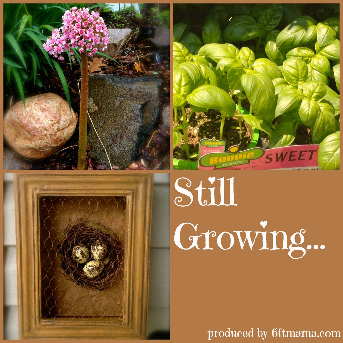 test Twitter Media - Master Gardeners Roundtable - Tips and Tales on the Still Growing Gardening Podcast - https://t.co/64QkjBCdc6 https://t.co/TtjK4CC4TT