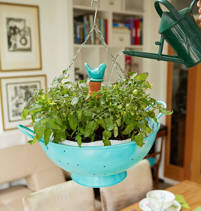 test Twitter Media - Looking for a weekend #gardening project? Learn how to grow tomatoes indoors with this clever colander #craft: https://t.co/z6tpb6XviW https://t.co/BTQbPNY0nh