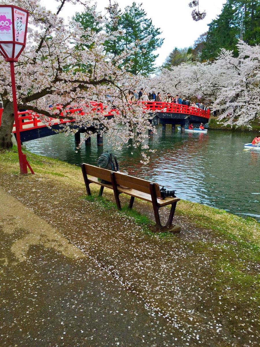 ふらいんぐうぃっち2巻表紙、桜の春陽橋…!私はこれが見たかったんです…!あと弘前城公園も、北の方は花筏完成一歩手前って感