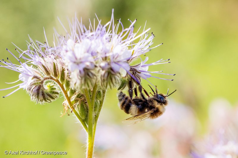 we can t survive without bees Bees and other pollinators are on a steep decline in europe what are the consequences of that silent disaster well, quite many, and much more worrying than.