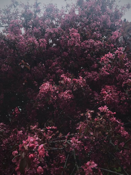 1 pic. Black trees bent to the ground / their blossoms made such a sound https://t.co/aEnuSw7KN1