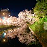 弘前城公園の夜桜、大変すばらでした。正直、ちょっと涙が出てくるくらい美しかったですね。こんないい夜桜なら犬飼さんだって不