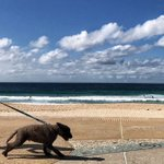 Sydney weather: Warm and sunny start to the week before showers arrive