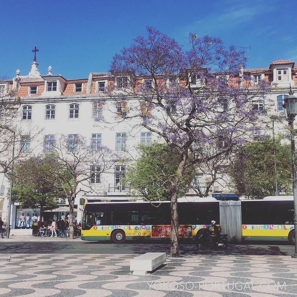 test ツイッターメディア - 例年より暖かい今年のリスボンは、ジャカランダが咲き始めています。 #リスボン #ポルトガル https://t.co/8bvQNBLSWQ