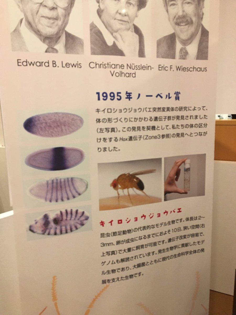 上野の国立科学博物館でいまやってる企画展の発生生物学特集ちょうおもしろかったんで気になる方はぜひ すごい気軽な感じで足の指が二倍あるヒヨコとか腹部分で繋がったカエルの作り方を展示しててドキドキした