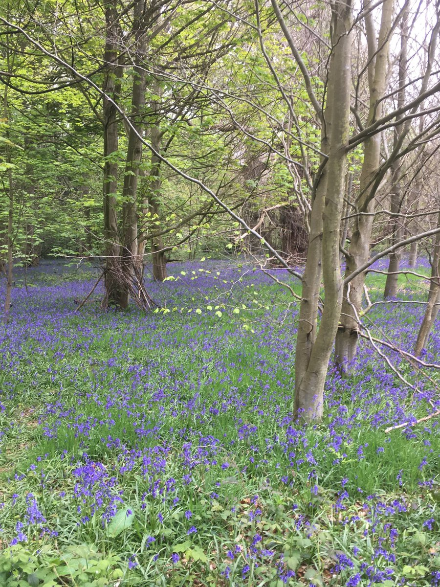 test Twitter Media - With beautiful coastal, countryside and park areas there are lots of walks to enjoy around #Cromer inc a Bluebell walk @BlicklingNT #Norfolk https://t.co/UoQUcN60wt