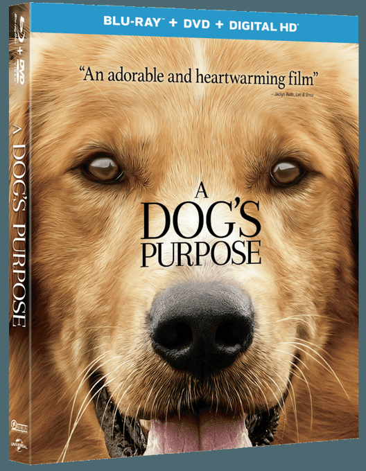 "GIVEAWAY: Enter NOW To Win ""A Dog's Purpose"" On Blu-ray!"
