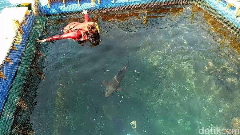 Sensasi Berenang Sambil Memberi Makan Hiu di Banyuwangi Underwater https://t.co/DiTxYfEYbw https://t.co/4C3i5SYEpF