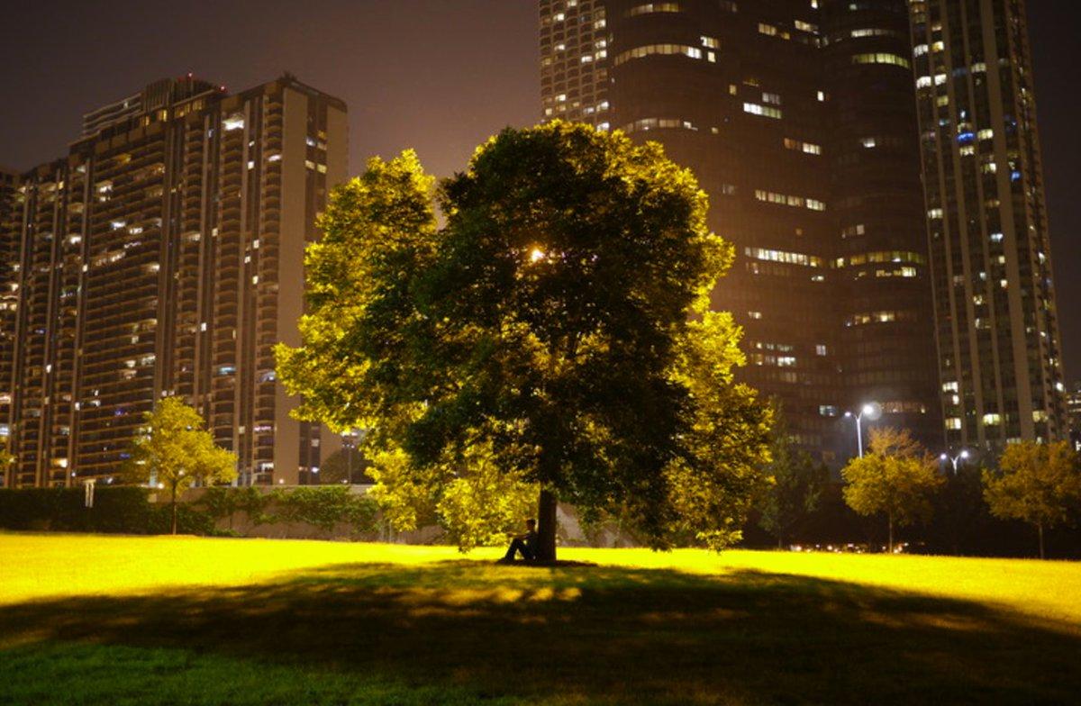 Post any photo w/ a tree in it here: https://t.co/dVFs84TOIj https://t.co/q2QOIHzPzG