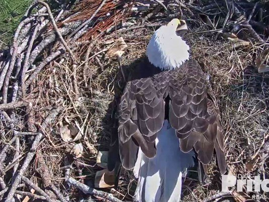 Were Still On Eagle Watch Eaglets Are Expected To Hatch In - What is the time now in florida