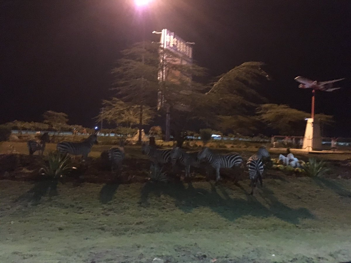 Zebras stuck on roundabout at JKIA, about 10 of them. Very spooked. Will get hit! @KenyaAirports @kwskenya https://t.co/mkOkxB1kYy