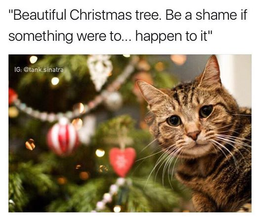 Cat lovers know the struggle all too well... #cats #Christmas https://t.co/izxKQ6ohyA