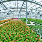 Horticulture processing plant to be set up in Kilifi