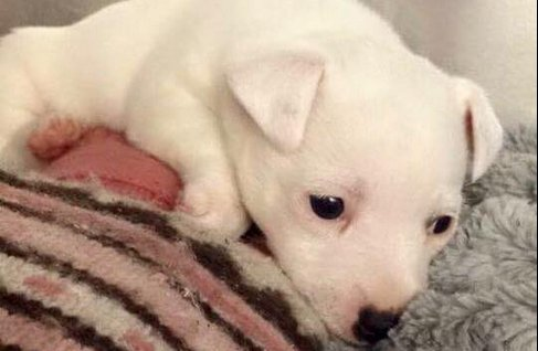 The six-week-old puppy abandoned in Dublin Airport has a new home