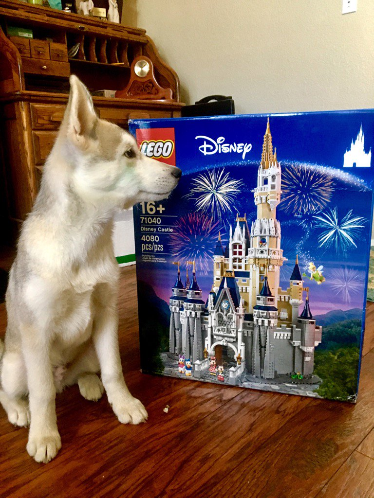 Got my little brother who's 11, this #Lego for Christmas 🎄 Even the dog is stoked! 😋 can't wait to see