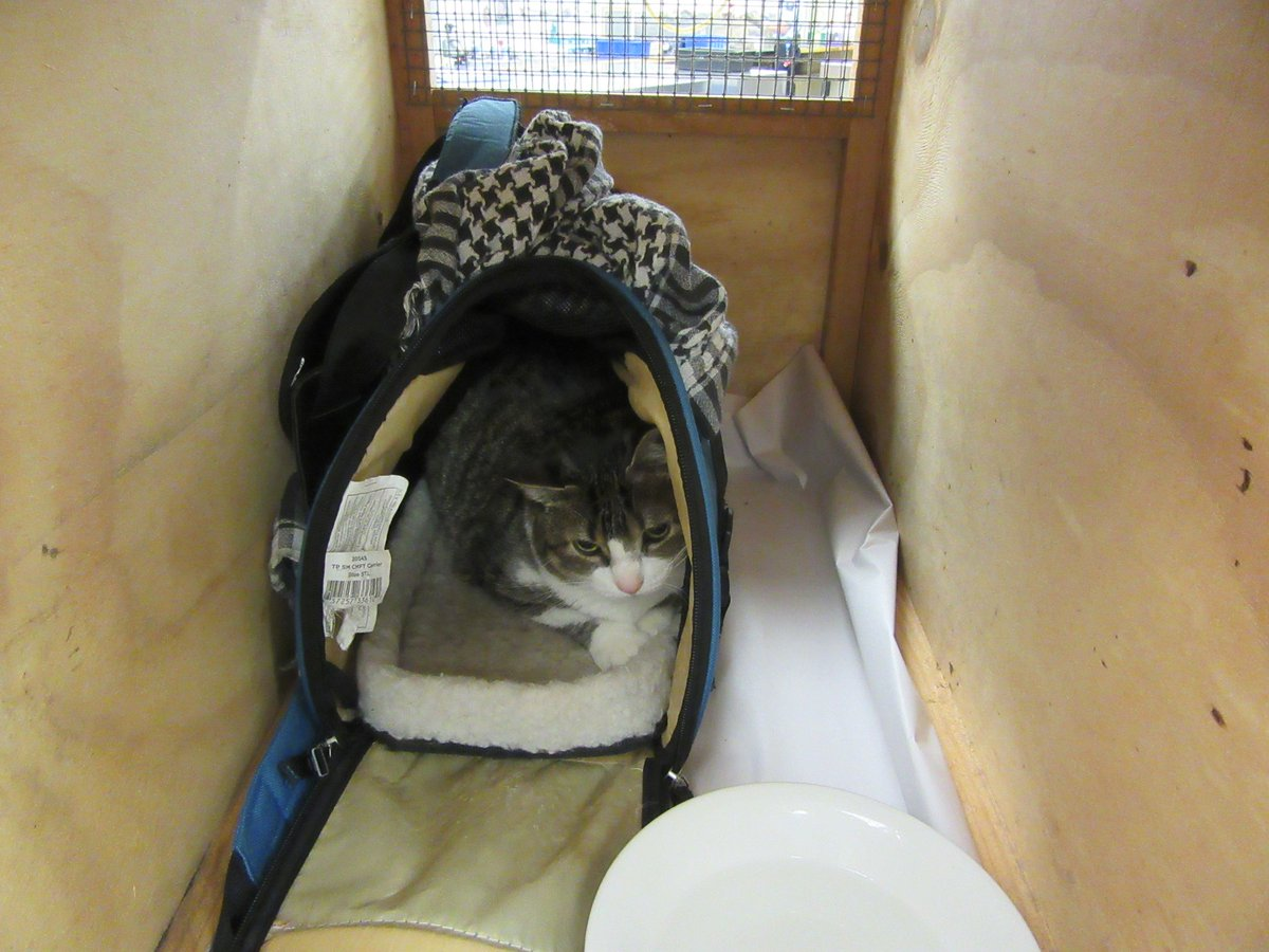 Canadian woman sent home for trying to smuggle pet cat into New Zealand