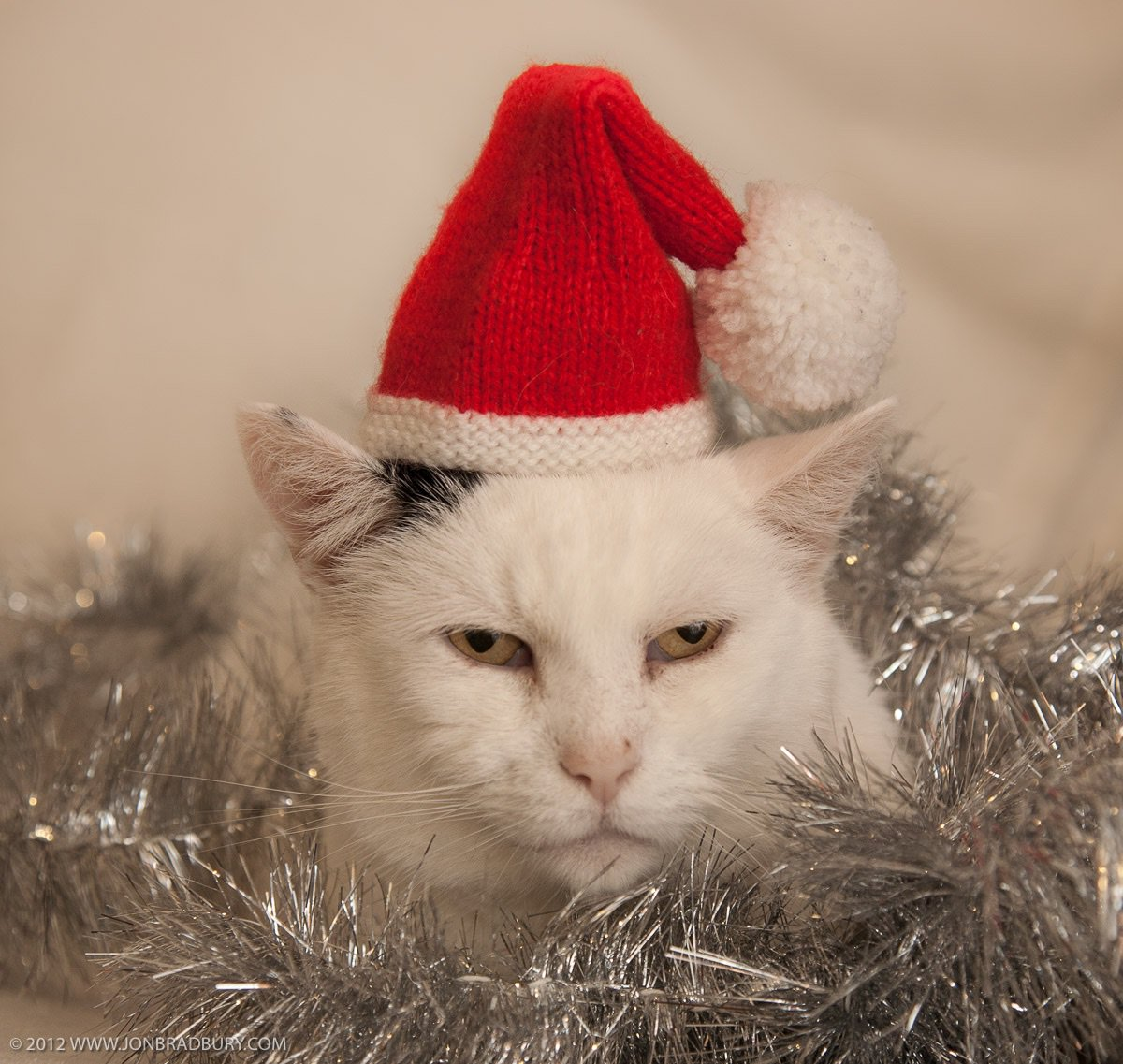 @eimaj_j @serichards love that, mind you I don't think our cat liked Christmas/Christianity forced on him either https://t.co/ClHmqNcCAP