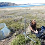 Research suggests climate change affecting plants above ground more than below