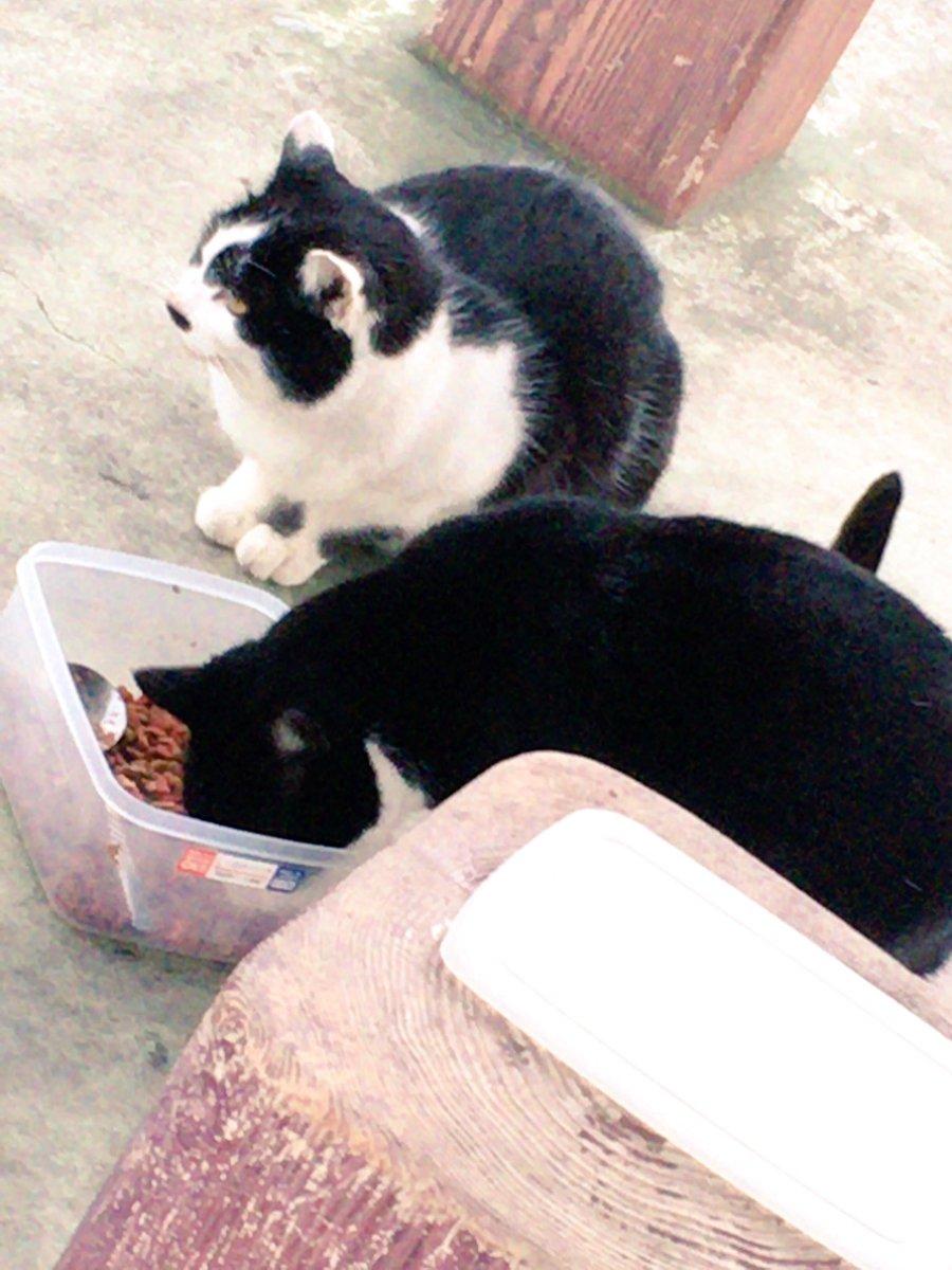 ネコちゃん親娘???? おじいさんにご飯もらってた。 https://t.co/PIFlvDbCfA