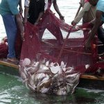 Illegal fishing: Govt mulls tougher laws