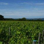 Sark Vineyards to close « Guernsey Press